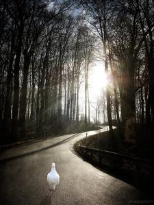 """""""[...] le soleil levant nous a visités d'en haut (Jésus-Christ)pour éclairer ceux qui sont assis dans les ténèbres et dans l'ombre de la mort[e], pour diriger nos pas sur le chemin de la paix.» La Bible Luc 1:78b-80"""