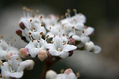 fleurs d'hivers