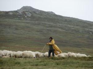 """""""L'Éternel est mon berger, je ne manque de rien."""" la Bible, Psaume 23:1"""