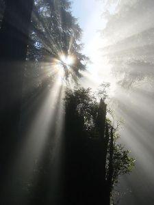 """""""Certes, les ténèbres recouvrent la terre et l'obscurité profonde enveloppe les peuples, mais sur toi l'Eternel se lèvera, sur toi sa gloire apparaîtra."""" La Bible, Esaïe 60: 2"""