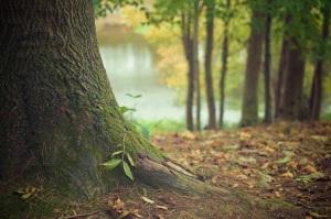 """""""Béni soit l'homme qui fait confiance à l'Eternel et qui place son espérance en Lui! Il ressemble à un arbre planté près de l'eau et qui étend ses racines vers le cours d'eau: il ne s'aperçoit pas de la venue de la chaleur et son feuillage reste vert. Lors d'une année de sécheresse, il ne redoute rien et il ne cesse pas de porter du fruit."""" la Bible, Jérémie 17:7-8"""