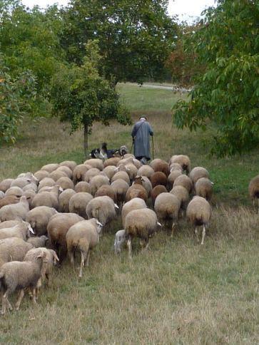 """""""L'Éternel est notre Dieu et nous sommes le peuple dont Il est Le berger, le troupeau que Sa main conduit."""" la Bible , Psaumes 95:7"""