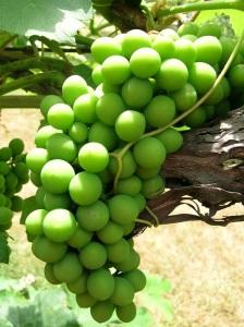 """""""Produisez donc du fruit qui confirme votre changement d'attitude"""" la Bible, Matthieu 3: 8"""