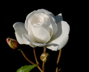 """""""Celui qui aime la pureté du cœur, Et qui a la grâce sur les lèvres, a le roi pour ami."""" La Bible, Proverbes 22:11"""
