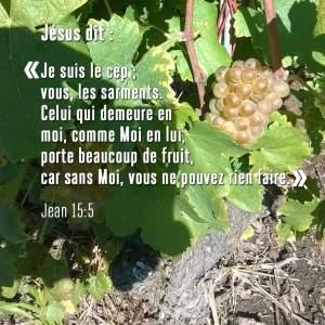 Jésus dit: Je suis le Cep